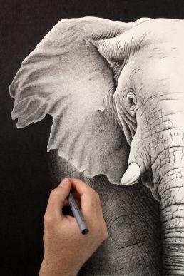 Crosshatching drawing of elephant
