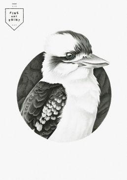 Kookaburra fine art print